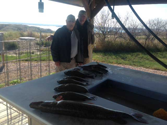 FISHING REPORT LAKES OAHE/SHARPE PIERRE AREA FOR OCTOBER 3RD THRU THE 6TH 2017